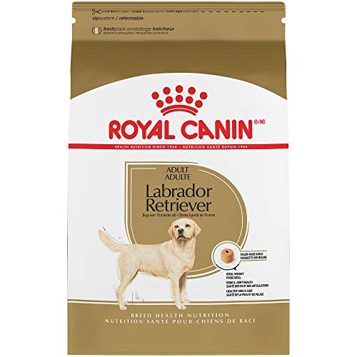 What Are The Best Dog Amp Puppy Food For Labs In February