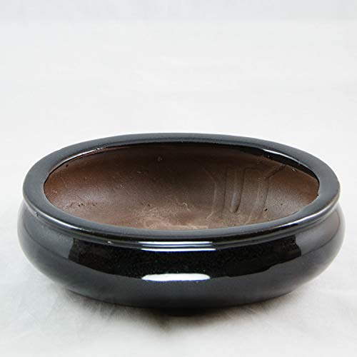 (Oval Shohin Bonsai/Cactus & Succulent Pot 8
