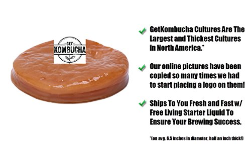 All Natural Organic Kombucha SCOBY - Largest Kombucha Mother Cultures In North America - Non Dehydrated, (6.5 inches in diameter) - Shipped With Organic Living Starter Tea Liquid 2 Makes A Lifetime of Kombucha Tea, 1 Gallon At A Time! Certified organic and fair trade ingredients used for both the kombucha mother and starter liquid 10+ years of providing the largest cultures in all of North America to thousands of home brewers