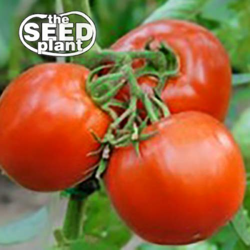Creole Tomato Seeds - 125 Seeds #tsp000168