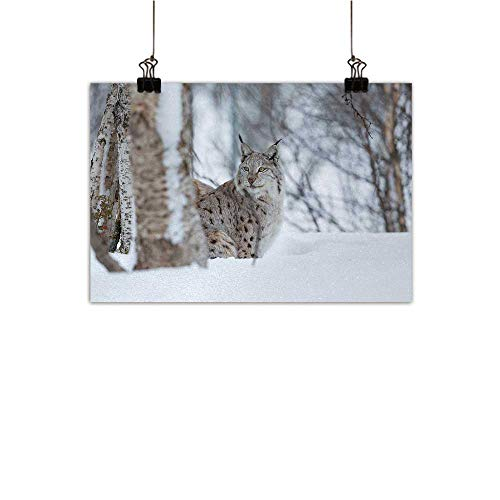 Anzhutwelve Animal Modern Frameless Painting European Lynx Snowy Cold Forest Norway Nordic Country Wildlife Apex Predator Bedroom Bedside Painting Light Brown White 35