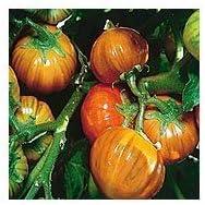 Eggplant Seeds 50 Seeds Turkish Eggplant Orange Vegetable Seeds