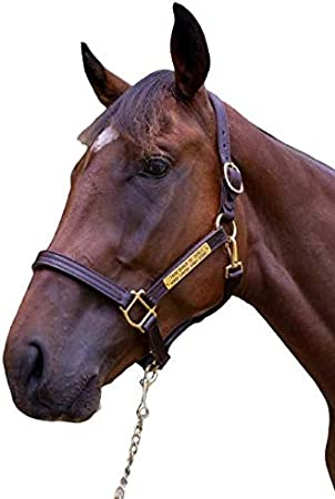Navy Blue Handcraft Brown Bridle Leather English Chin Double Stitched with Rolled Throat Solid Brass Hardware and Snap Tack Shack of Ocala Padded Leather Horse Halter