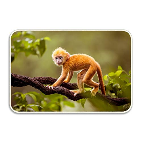 osed Monkeys Doormats Rubber Non Slip Entrance Floor Mat Indoor/Outdoor/Front Door/Bathroom Mats ()