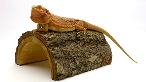 Carolina Giant Half Log, Reptile Habitat Accessory by Carolina Custom Cages
