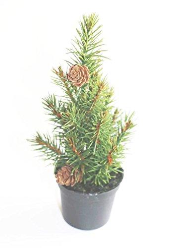 FD Mini árbol de Navidad con piñas Altura 20 cm árbol Mesa Árbol ...