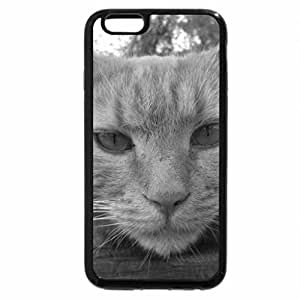iPhone 6S Case, iPhone 6 Case (Black & White) - Beautiful Male Ginger Cat