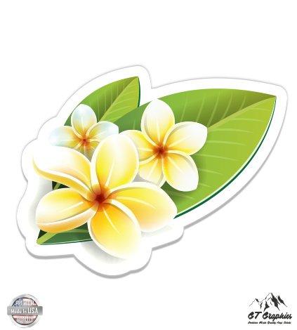 Hawaiian Flowers Plumeria Beautiful - 5
