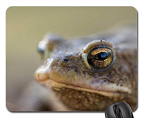 Mouse Pad - Frog Toad Nature Amphibians Aquatic Animal Animal ()
