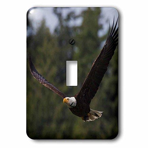 3dRose Danita Delimont - Birds of prey - Bald Eagle for sale  Delivered anywhere in USA
