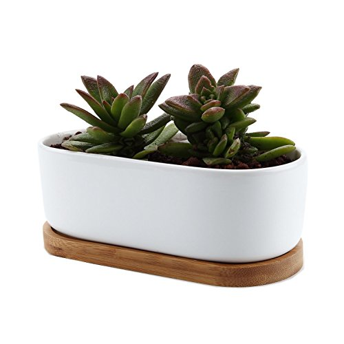 T4U 6.5 Inch Ceramic White Modern Oval Design Succulent Plant Pot/Cactus Plant Pot with Free Bamboo Tray ()