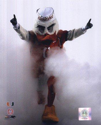 Sebastian the University of Miami Hurricanes Mascot 2006 Football Photo (8 x 10) (2006 Real Football)