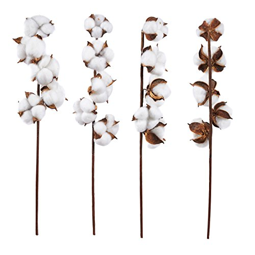 Juvale Cotton Stems - 4-Pack Cotton Flowers, 5 Balls per Stem, Farmhouse Style Display Vase Filler, Rustic Decorations Home, Office, 17.5 inches