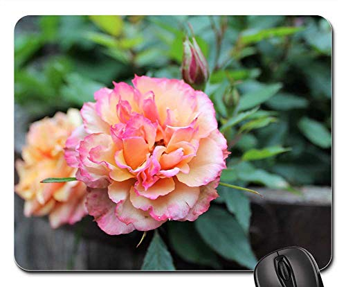 Mouse Pad - Rose Scented Pretty Summer Flower Natural ()