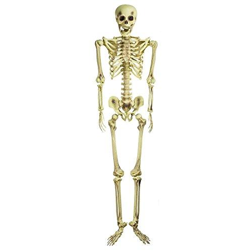 Bargain Basement Barney The Famous 5 Foot Halloween Skeleton