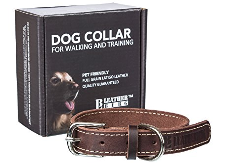 Leatherberg Leather Dog Training Collar - Dark Brown - Real Leather Pet Trainer Collar (Medium) (Real Leather Dog)