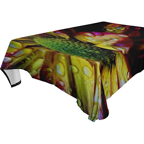 RH Studio Table Cloth Flower Colorful Drops Petals Shadow Background Rectangular Tablecloth for Dinner Kitchen Party Picni Wedding Restaurant Or Banquet Tablecovers Spread 54x72 Inch