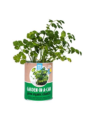 back-to-the-roots-garden-in-a-can-organic-cilantro