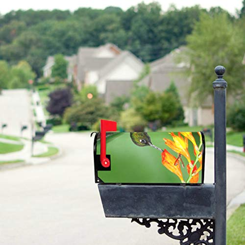 HTJZH Hummingbirds are Sucking Nectar Mailbox Covers Standard Size Original Magnetic Mail Cover Letter Post Box 21