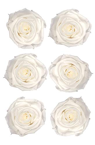 ROSA DORMANT Preserved Roses | Natural Roses That Last for Months - Eternity Roses | Use Instead of Artificial Roses for Decoration | Preserved Flowers for Bouquets | Box of 6 Rose Heads (PureWhite) (Box Bouquet Rose Romantic)