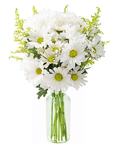 KaBloom Bountiful Beauty Bouquet of Fresh White Daisies with Vase ()