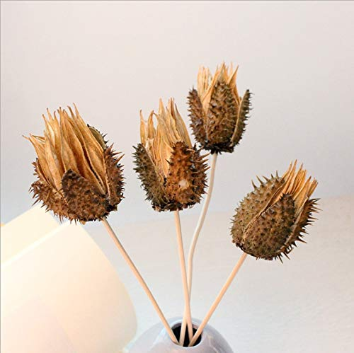 Yummi697 Rattan Replacement Sticks Sunflower Shell Shape Reed Diffuser Handmade Home Decoration Simple Style by Yummi697