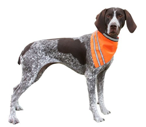 AKC Pet Safety Bandana with Reflective Stripes, Medium, Orange, My Pet Supplies