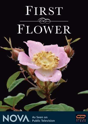 NOVA: First Flower ()