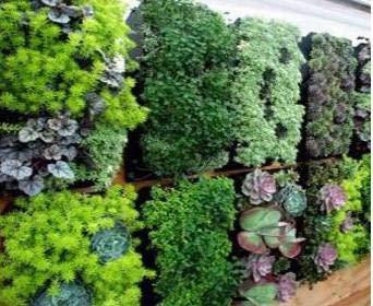 12 Pocket Garden Outdoor Vertical Living Wall Planter by Green-Planter (Image #4)