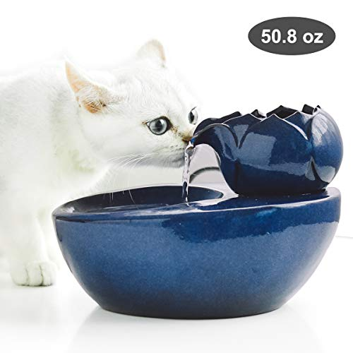DINGQU Drinkwell Lotus Cat Water Fountain Review