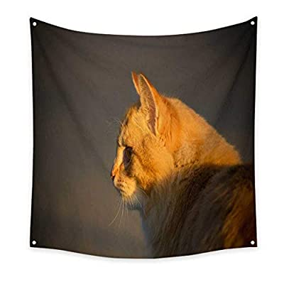 BlountDecor Horizontal Tapestry Orange Tabby Cat
