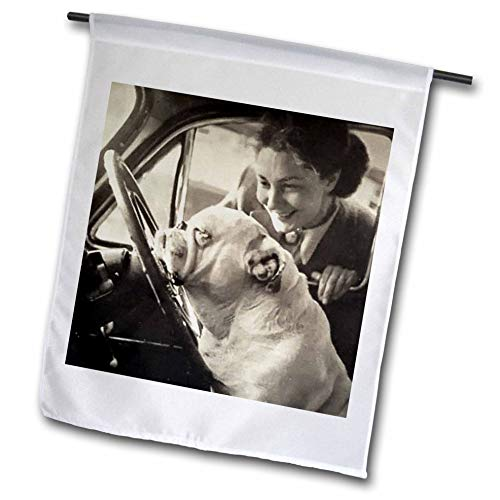 - 3dRose Scenes from The Past - Vintage Photography - Vintage 1940s Bulldog Driver Funny Picture for The Dog Lover - 12 x 18 inch Garden Flag (fl_301335_1)
