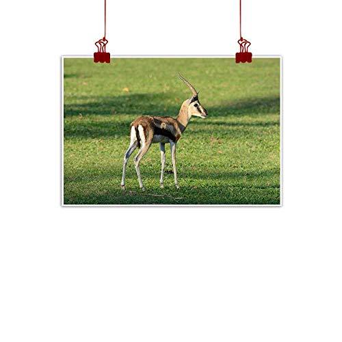 "duommhome Wall Art Decor Poster Painting Male Thomson s Gazelle (Eudorcas thomsonii) Modern Minimalist Atmosphere 20"" Wx16 L"
