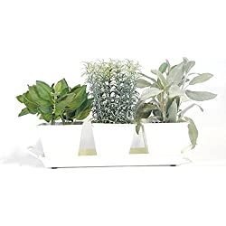 Windowsill Herb Garden Kit (Cream White) - Metal Planters, 5 Herbs, Soil and Labels