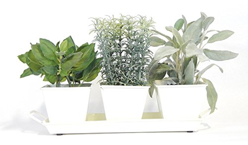 Windowsill Herb Garden Kit (Cream White) - Metal Planters, 5 Herbs, Soil and (Herb Window)