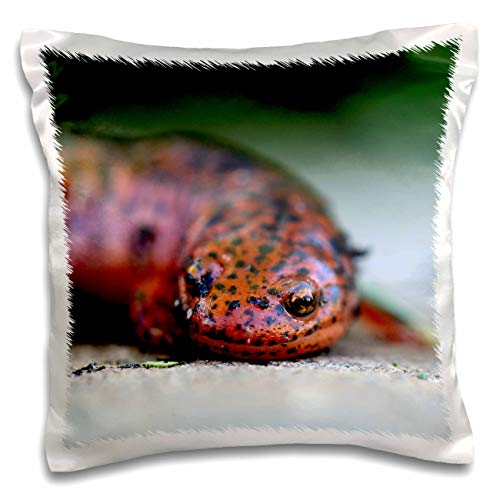 - 3dRose Stamp City - amphibian - Macro photograph of a red mud salamander. - 16x16 inch Pillow Case (pc_316757_1)