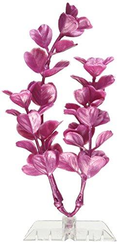 (GloFish 19264 Moneywort Plant, Medium, Pink)