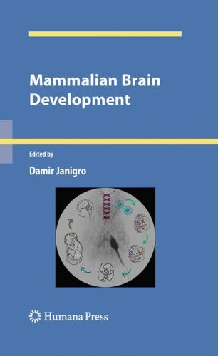Mammalian Brain Development (Contemporary Neuroscience)