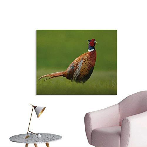 (Tudouhoho Bird Cool Poster Common Pheasant with Long Tail on The Green Grass Meadow Habitat Czech Republic Mural Decoration Green Orange Red W32 xL24)