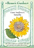 Sunflower, Sunzilla Giant