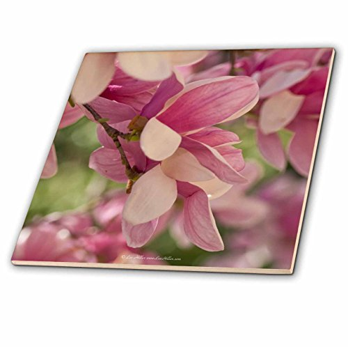 Park Saucer - 3dRose Lee Hiller Photography Hot Springs National Park Flowers - Spring Flowers Saucer Magnolias 2011 III - 12 Inch Ceramic Tile (ct_14055_4)