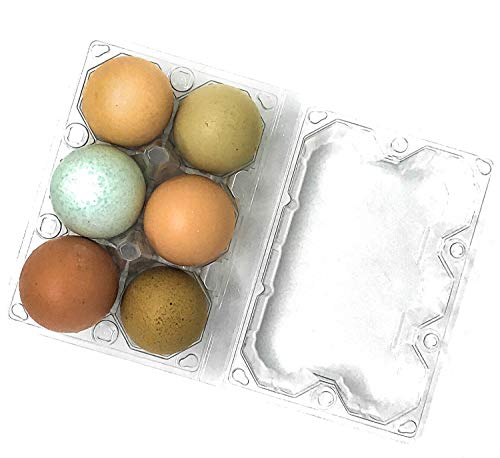 24 Pack Premium Clear Plastic Reusable Half Dozen Egg Container Carton with Labels holds 6 Large Eggs ()