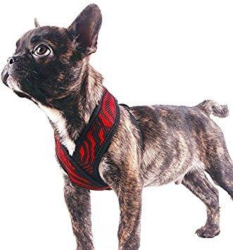 Buy EXPAWLORER Choke Free Small Dog Vest X Frame Design with