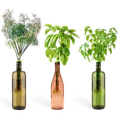 Urban Leaf Indoor Herb Garden Starter Kit: Culinary Classics Window Sill Garden Kit with Sweet Basil, Dill and Lemon Basil Seeds - Fresh Herbs at Home Planter - Small Growing ()