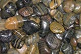 Polished Pebble, Tiger Striped, 1½-2½''
