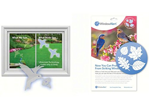Window Alert Hummingbird Decals and Leaf Medley Decal Includes Teapex Brand Squeegee bundle