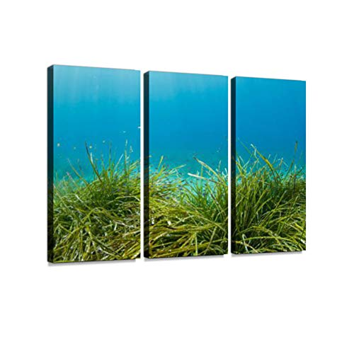 (Seagrasses Underwater Sea Life Scuba Diver Point of View Sea Grass Posidoniaceae 3 Pieces Print On Canvas Wall Artwork Modern Photography Home Decor Unique Pattern Stretched and Framed3 Piece)