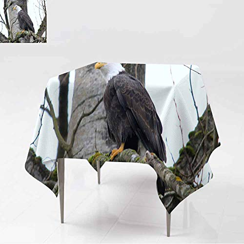 AFGG Resistant Table Cover,Big Bald Eagle on The Tree Ruskin Great Vancouver,for Events Party Restaurant Dining Table Cover,54x54 Inch]()