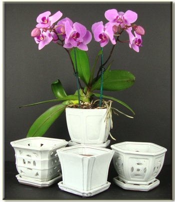 Vanilla Solid Hexagon Ceramic Orchid
