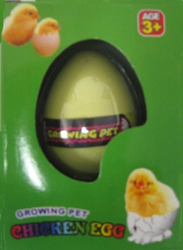 Hatching Chicken Egg by Toy
